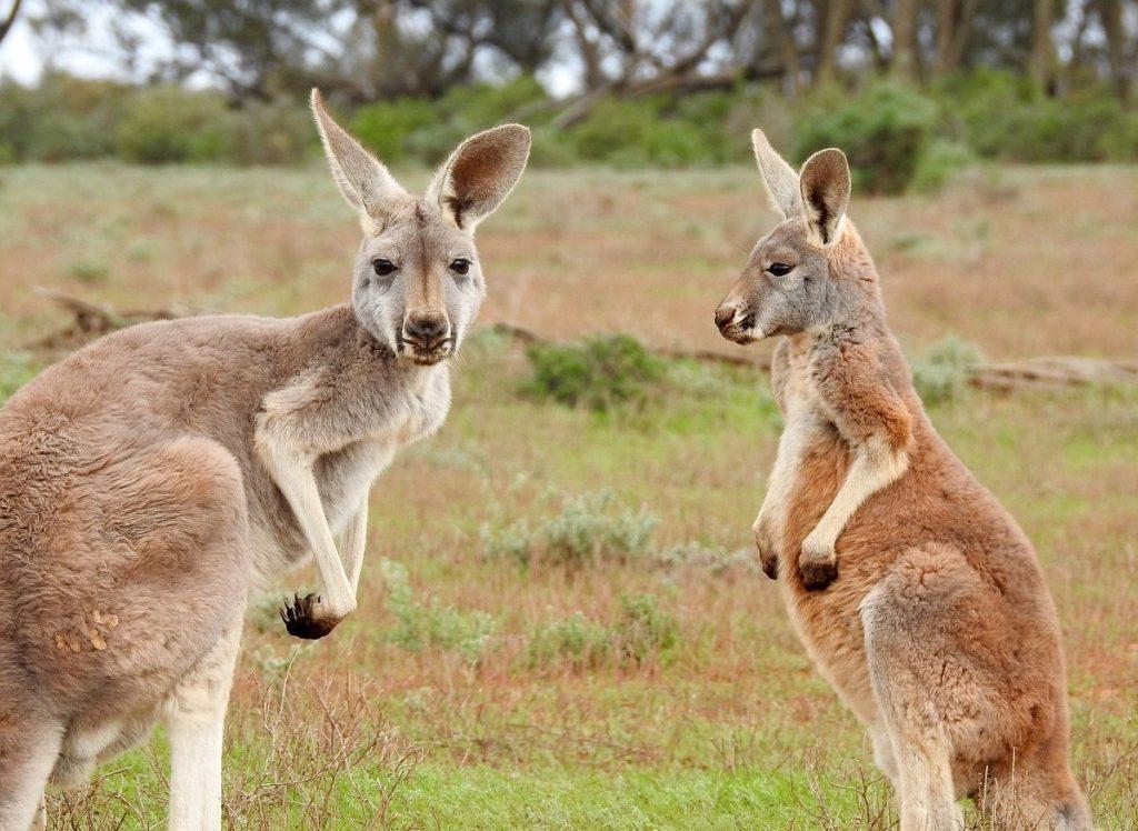 Australien kennenlernen